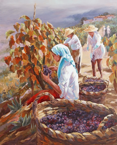 Vendimiando uva negra